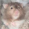 platypus: (Benny - cute)