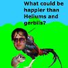 platypus: (heliums)