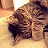 platypus: (Toeffe - sleepy)