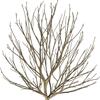 randwolf: (Tree)