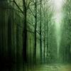 pensieve: (green)