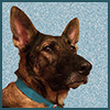cyprinella: German Shepherd profile (Zille profile)