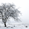 bellflower: A snow-laden tree in a field covered edge to edge in snow ([Misc] Winterscape)