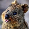 quokka_happy: (Default)