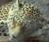 hlmauera: (Sleepy Kitty)