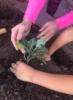 morningloryblue: (Desert Gardening)