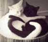 gaeln9796: (icon personal_cats_b&w)