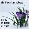 latenightparty: (Flowers)