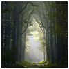 bellflower: Trees frame a path towards a light-filled sky ([Misc] Pathway)