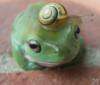 happybat: (frog)