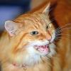 lois2037: (CatBoy Speaks)