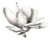 magnoliasteel: (Default)
