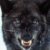 mzplatypus: (wolf) (Default)