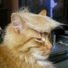cybernatic_cat: (trumpcat)