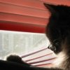 forgotten_aria: (Monorail Cat)