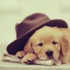 s2309: (puppy)