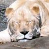 mooncat_chelion: (sleepy)