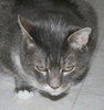 mooncat_chelion: (grumpy mojo)