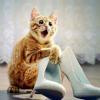 unstablekitten: (kitten shocked)