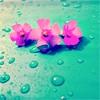 unstablekitten: (flower)