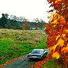 cowboyguy: (fall Impala)