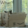 azriona: (cat in a box)