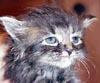 m_cobweb: (unhappy kitten)