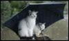 m_cobweb: (umbrella cats)