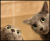 m_cobweb: (wtf kitties)