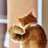 m_cobweb: (orange tail)