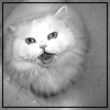 m_cobweb: (white cat meow)