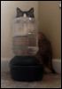 m_cobweb: (cat hiding)