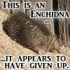 themightyflynn: (echidna)