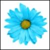 nicalycab: (Blue Daisy)
