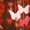 kukalaka23: (butterflies)
