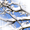 hellkitty: (snow branch)