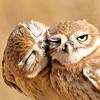 selfindulgence: (owl kiss)