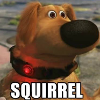 wolffe: (up dog squirrel!)