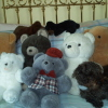 julival2: (my bears)