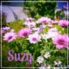suzy: (FlowersPink)