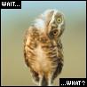 fireandearth: (quizzical owl)