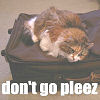 shhhlisa: (don't go)
