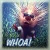 kyanoswolf: (whoa)