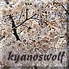 kyanoswolf: (spring)