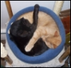 kyleri: two cats, one orange, one black, curled up together in a round cat bed (caaaats)