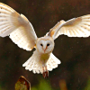 aivix: (Hedwig)
