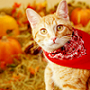 greylen: (pumpkin fall kitteh)