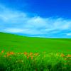 greylen: (meadow)