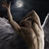 meus_venator: (Wings - Angel at Midnight)