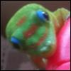 rawdon: (gecko)